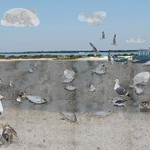 Art Education Student's Work birds on beach near water